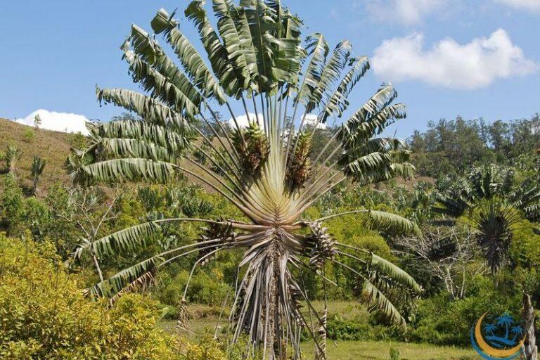 L'emblème de Madagascar