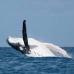 Safari baleine à Nosy Be