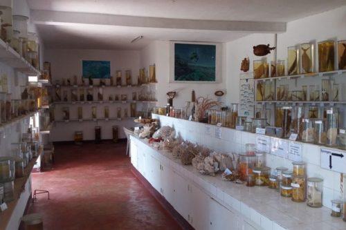 Muzeum CNRO wścibskie