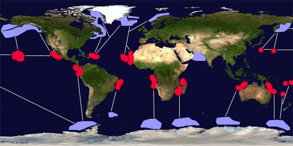 Migration baleine nosy be