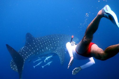 excursion requins baleines nosy be
