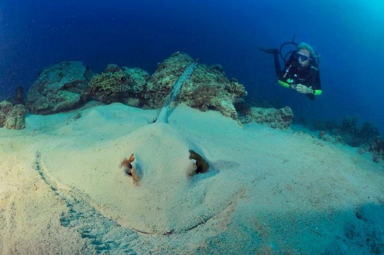 Diving in Nosy Be, more than 20 spots for all levels