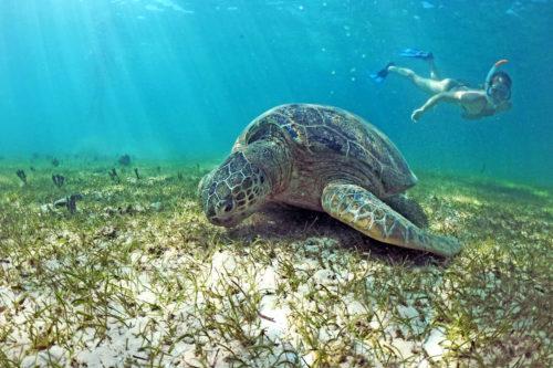 Snorkeling ficcanaso Komba