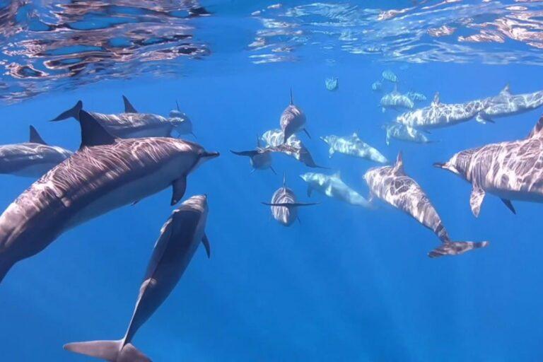 banc dauphin nosy komba