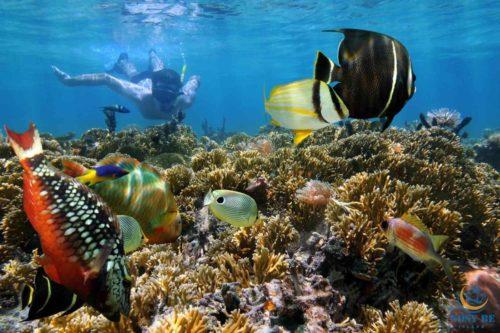 fare snorkeling ficcanaso