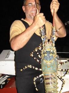 homar wścibski bądź madagaskar