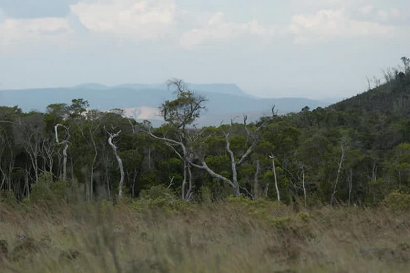 The Ambohitantely Reserve, the only protected area of Analamanga