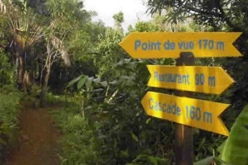 A walk in the heart of Ambodiriana forest