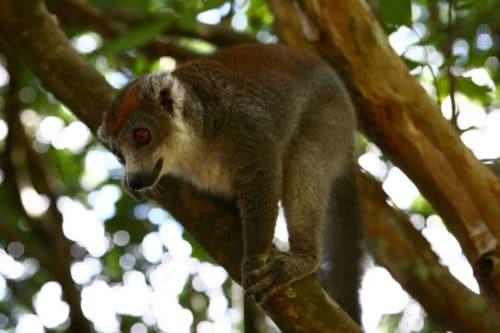 Scopri il parco Ivoloina a Tamatave