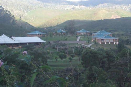 Eulophiella à Andasibe - Madagascar