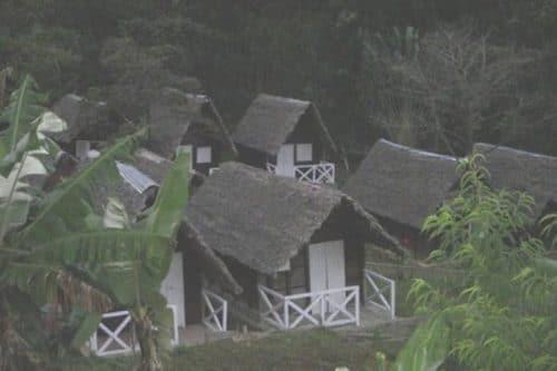 Foret australe à Antsirabe - Madagascar