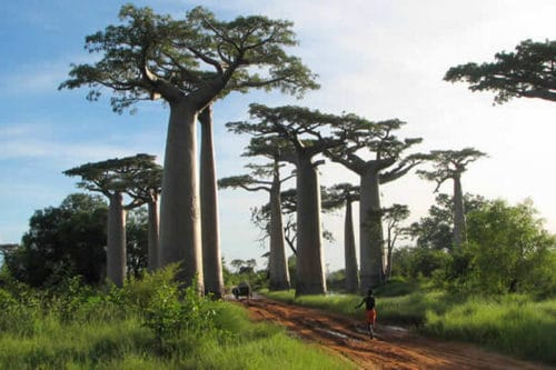 Year 2016: great prospects for the tourism sector in Madagascar
