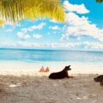 plage sambatra beach lodge sainte marie