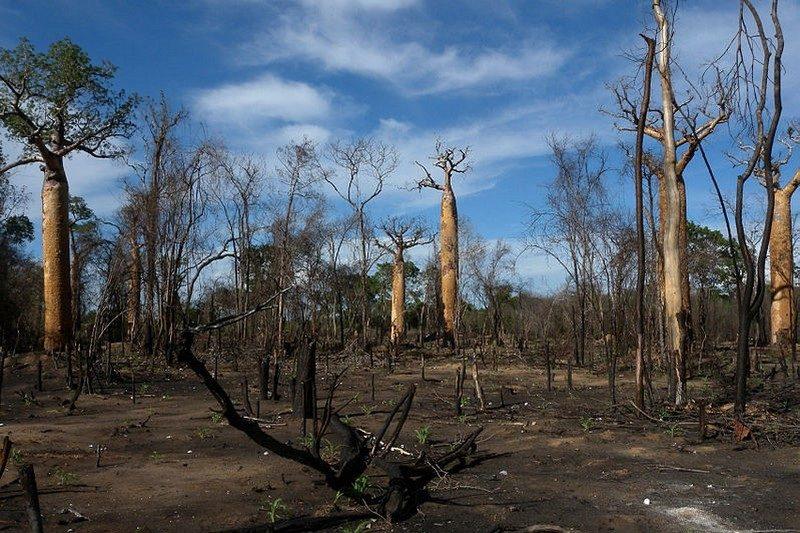 deforestation baobab Madagascar