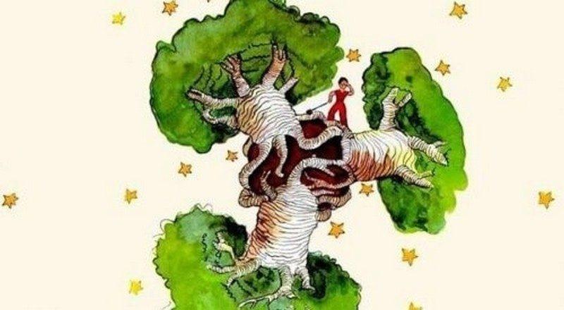 piccolo principio Baobab Madagascar