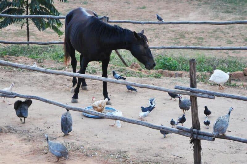 les animaux que l' on trouve à L'Odyssée - Tana Antananarivo