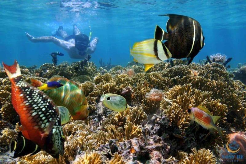 6- Parce que Nosy Be, c'est aussi un énorme aquarium