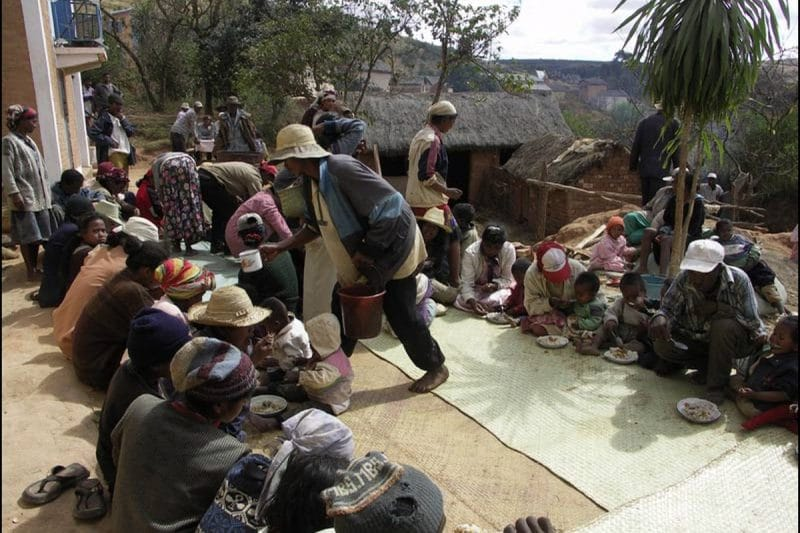 Zébu à Madagascar