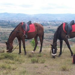 Horse riding or mountain biking in Antsirabe