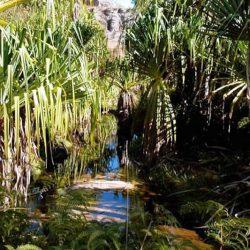 Visit of the Rats Canyon at Isalo National Park