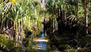 Visite du Canyon des Rats au Parc national de l'Isalo