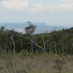 La Riserva Ambohitantely, l'unica area protetta di Analamanga