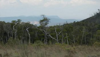 La réserve d'Ambohitantely, l'unique aire protégée d'Analamanga