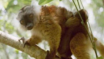 Lemuria Land, un parc botanique et zoologique à découvrir !