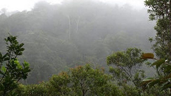 Quelles solutions pour augmenter le nombre d'aires protégées à Madagascar ?