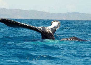Safari whale in Nosy Be