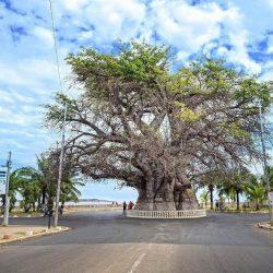 Baobab del Madagascar