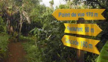Une balade au coeur de la forêt d'Ambodiriana à Sainte Marie