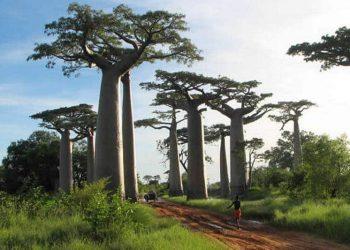 Année 2016 : de belles perspectives pour le secteur tourisme à Madagascar