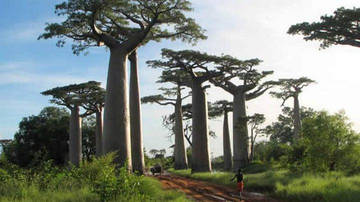 Rok 2016: wielkie perspektywy dla sektora turystyki na Madagaskarze