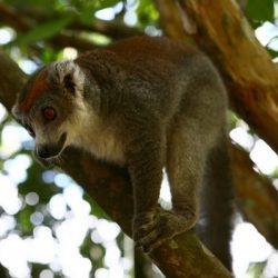 Odkryj park Ivoloina w Tamatave