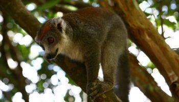 Découvrez le parc d'Ivoloina à Tamatave