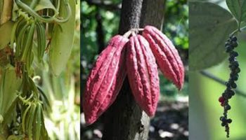 Balades dans les plantations d'Ankify