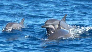 Morskie safari wścibskie